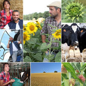 Mosaic of daily life on a farm — Stock Photo