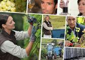 Winorośli, zbiorniki nierdzewne, producentów wina i enologu lub — Zdjęcie stockowe