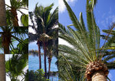 Palms photomontage — Stock Photo