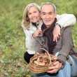 Senior couple collecting mushrooms in the forest — Stock Photo