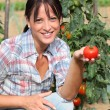 Woman in garden kneeling by tomato plant — Stok Fotoğraf #7784254