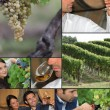 Viticulture — Stock Photo #7787181