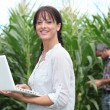 Stock Photo: Womusing her laptop in field of crops