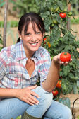 Woman in garden kneeling by tomato plant — Stok fotoğraf