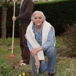 An elderly couple gardening — Stock Photo #7791446