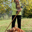 Woman raking up the autumn leaves — Stock Photo