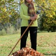 Woman raking up the autumn leaves - Stock Photo