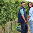 Couple picking grapes — Stock Photo #7793168