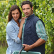 Royalty-Free Stock Photo: Couple picking grapes