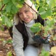 Picking grapes — Stock Photo #7793217