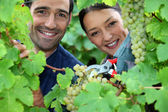 Couple of wine-growers all smiles amid vineyards — Stock Photo