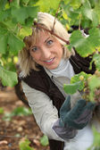 Portrait of a wine-grower — Stock Photo
