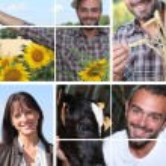 Collage illustrating life on the farm — Stock Photo