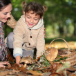 A mother and her little girl picking mushrooms in the forest — Stock Photo