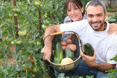 Couple growing vegetables — Stock Photo