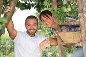 Couple picking fruit — Stockfoto