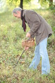 Man looking for mushrooms — Stockfoto