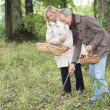 Couple picking mushrooms — Stock Photo