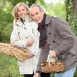 Senior couple gathering mushrooms — Stockfoto