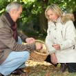 Couple collecting chestnuts in the woods - Stock Photo