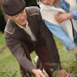 Seniors in garden — Stock Photo #7892488