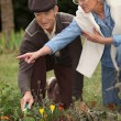 Elderly couple gardening — Foto Stock