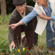 Elderly couple gardening — Stock Photo