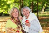 Women gathering apples — Stock Photo
