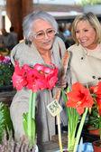 女性の花を熟慮 — ストック写真