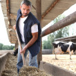 Stock Photo: Farmer in stable