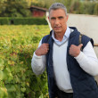 Stock Photo: Mature grape-picker carrying hod on his back