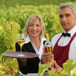 Stock Photo: Wine growers on their crops