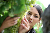 Woman inspecting grapes in a vineyard — Stock Photo