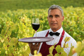 Man serving a glass of red wine in the middle of a vineyard — Stock Photo