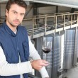 Stock Photo: Producer in wine warehouse