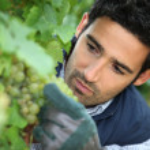 Man working in his vineyard — Stock Photo