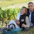 Couple of radiant wine-growers posing in vineyards — Stock Photo #7911058