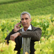 A mature man in a middle of a vineyard. - Stock Photo