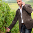 Farmer with mobile telephone stood in vineyard - Foto Stock