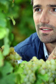 Farmer in his vineyard — Stock Photo