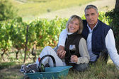 Couple of radiant wine-growers posing in vineyards — Stock Photo