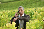 A mature man in a middle of a vineyard. — Stock Photo