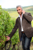Farmer with mobile telephone stood in vineyard — Stock Photo