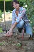 Woman digging potatoes — Stock Photo