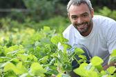 Portrait of a farmer — Stock Photo