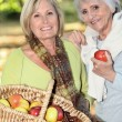 Stock Photo: Women gathering chestnuts and apples