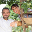 Couple picking fruit — Stock Photo #7944444