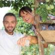 Couple picking fruit — Stock Photo