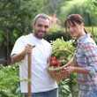 Couple stood in garden with vegetables — Stock Photo #7944523