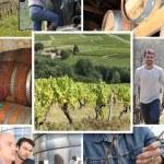wijnmakers — Stockfoto